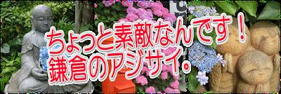 鎌倉でアジサイ