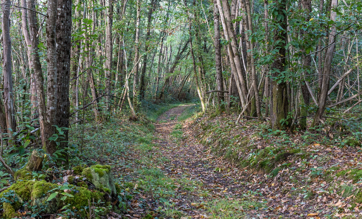 Image result for a walk through the woods