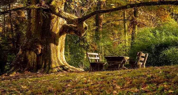 Parcul dendrologic Arboretum Simeri