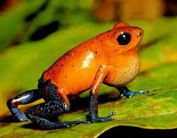 Sistem Integumen Pada Amfibi, Reptil, Aves dan Manusia