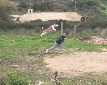 L'entraînement impressionnant de chiens au saut en longueur