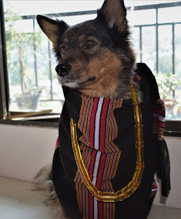 Mizo Traditional dog