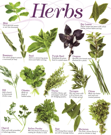 Kitchen Herbs: AmethJera's Broom With A View: Kitchen Witch: Herb Cookery