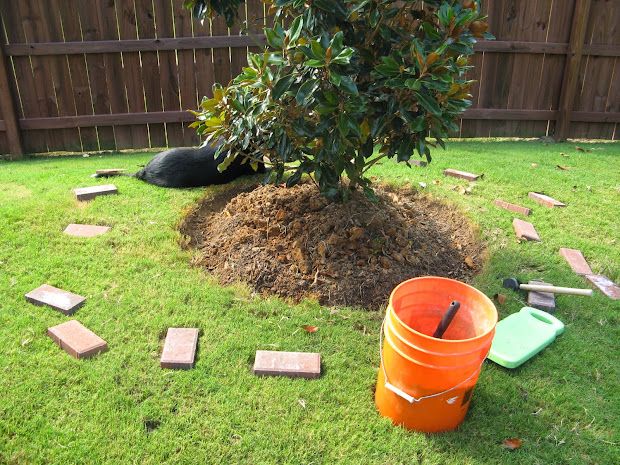 landscaping tree roots