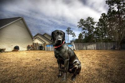 Increíble fotografía HRD perro
