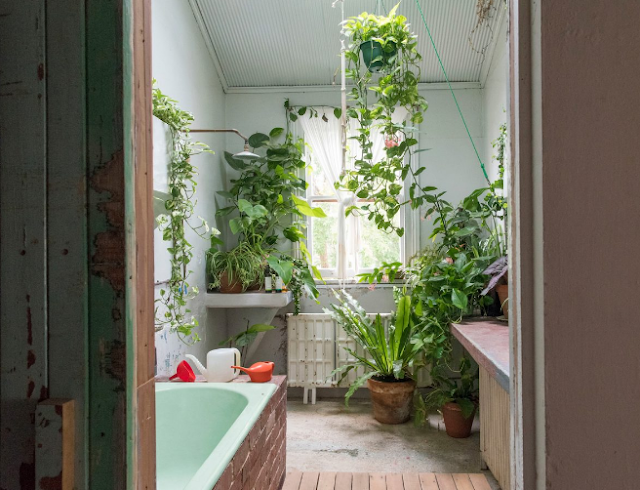By putting a variety of live plants will be like bathing outdoors.