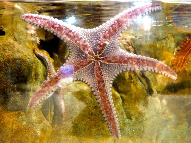 Starfish in the Grand Aquarium, Ocean Park, Hong Kong