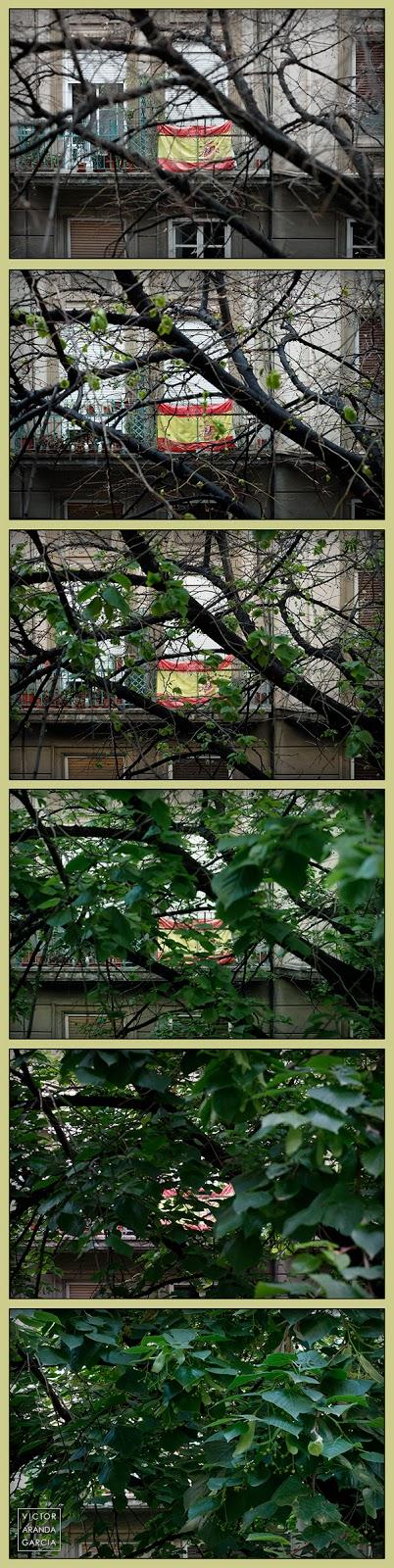fotos,bandera,naturaleza,hojas,primavera