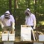 Transfert en ruche