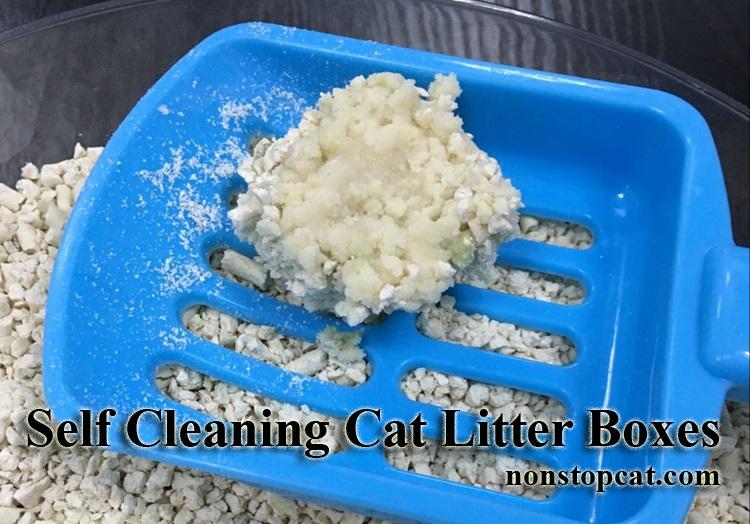 Best Kitty Litter For Odor