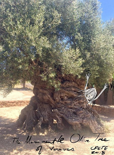 Monumental olive tree of Vouves, Crete