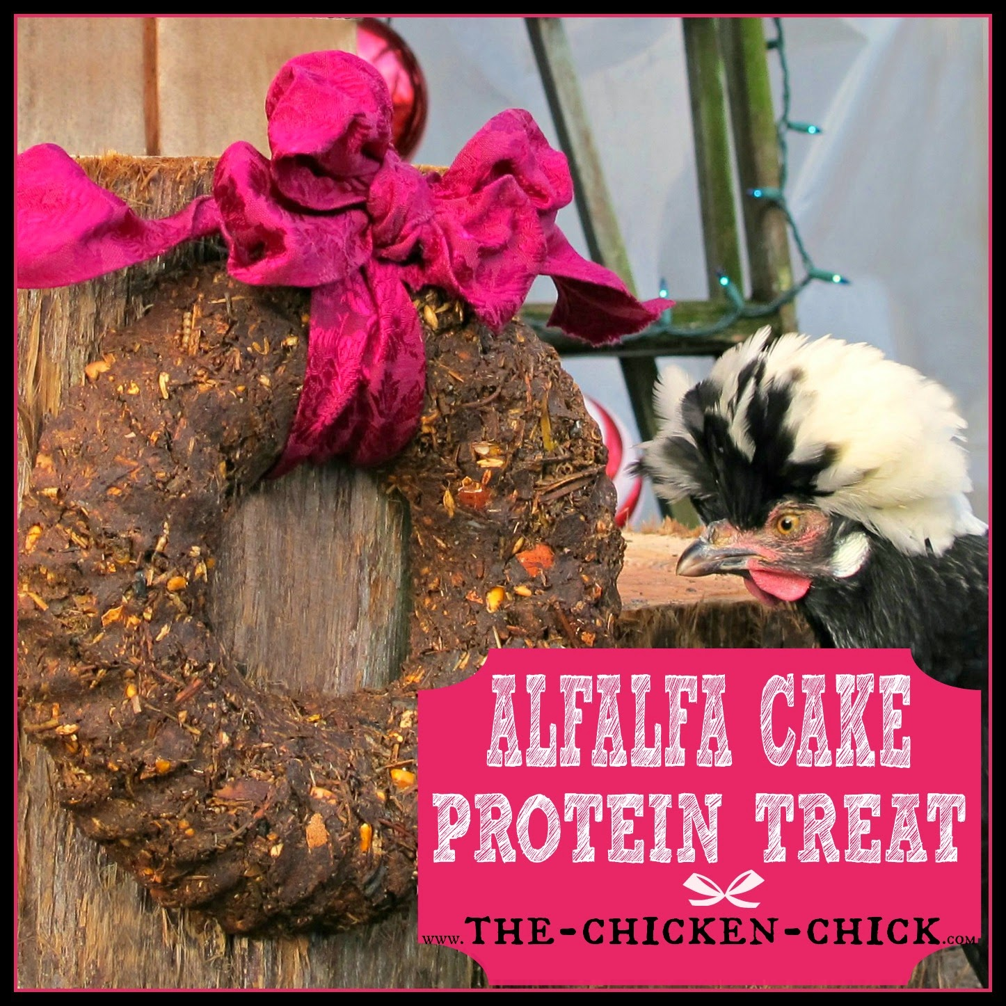 Alfalfa Cake Protein Treats