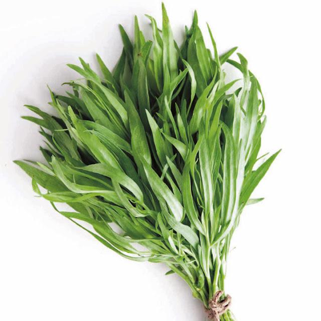 tarrragon plant