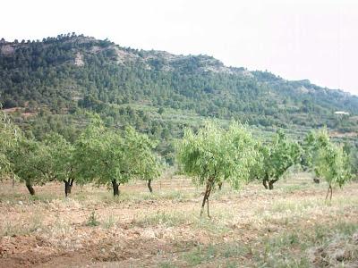 La pileta, camino, pantano de Pena, embalse, finca, almendros, olivos 13