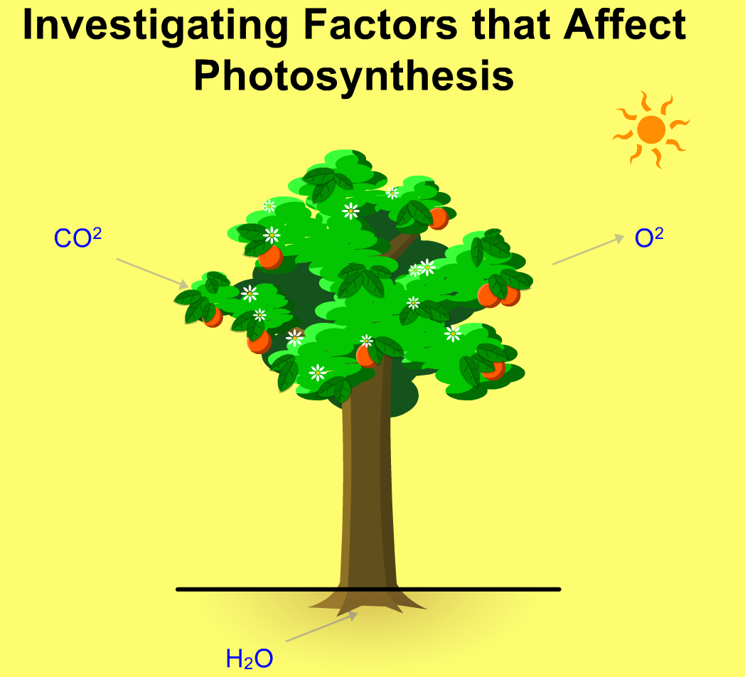 Photosynthesis Javascript Html5 Applet Simulation Model