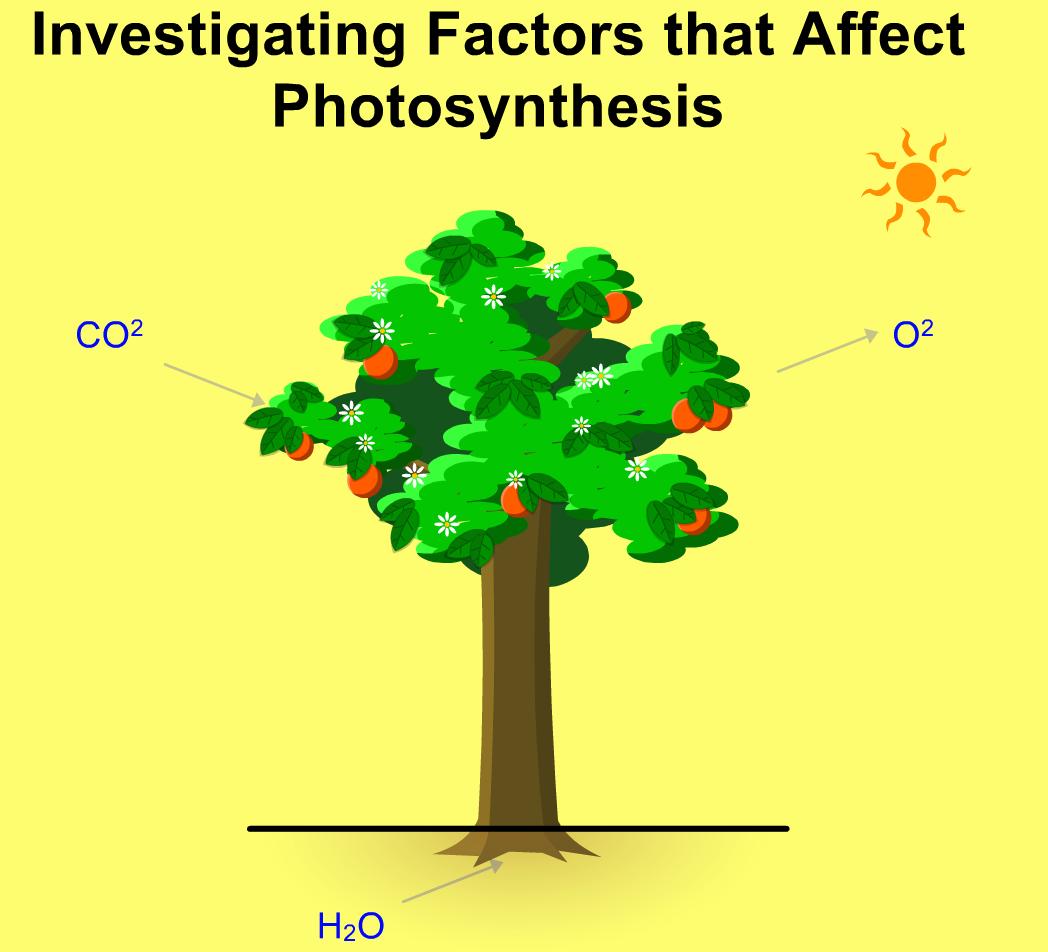 Photosynthesis Javascript Html5 Applet Simulation Model