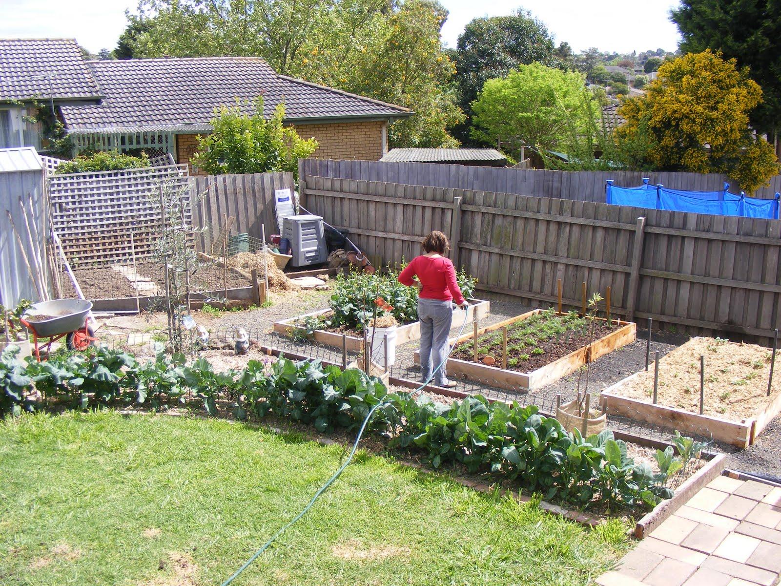 Backyard Self-Sufficiency: 7. Organic Plant Maintenance