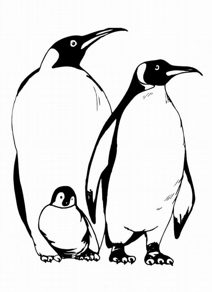 gambar mewarnai pinguin untuk anak paud dan tk  mewarnai