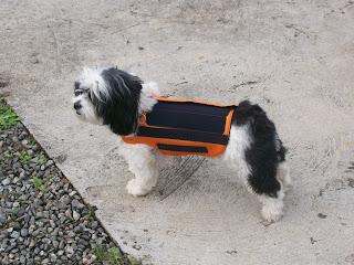 imobilização de coluna de cães