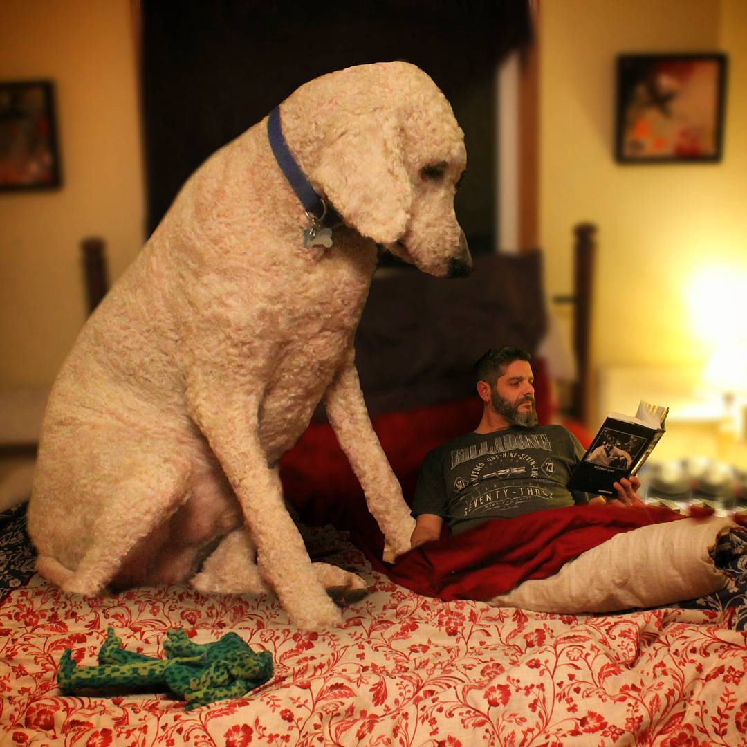 02-No-More-Stephen-King-Before-Bed-Christopher-Cline-Juji-The-Giant-Dog-Photo-Manipulations-www-designstack-co