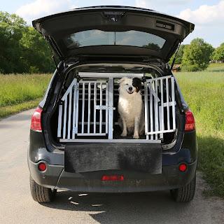 Viajar con mascota en vacaciones - Fénix Directo Blog