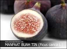 10 Manfaat buah tin (Ficus carica L.) bagi kesehatan kita