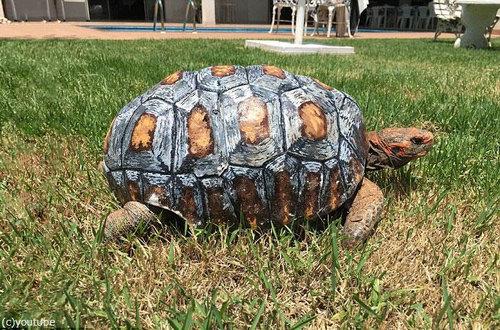 折れたクチバシを3Dプリンターで再生?3Dプリンターで動物たちを救う【n】