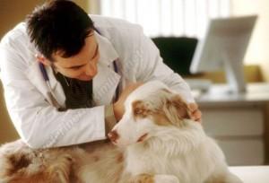 Veteriner Hekimlerin Maaşı