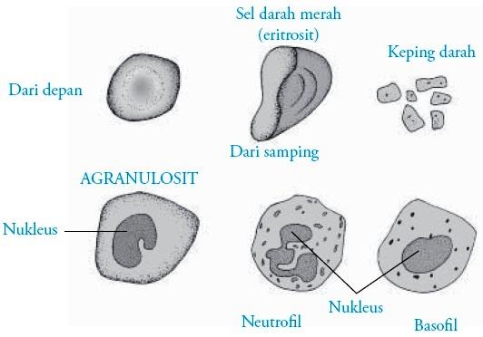 KOMPOSISI DARAH MANUSIA EPUB