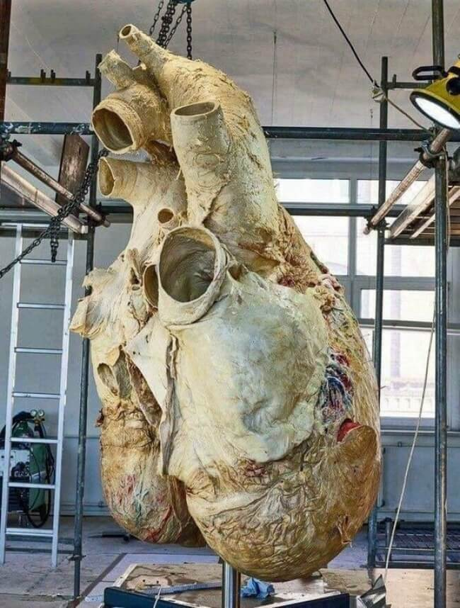22 Breathtaking Images Of Things You've Never Seen Before - A whale's heart