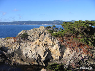 Views from Point Lobos