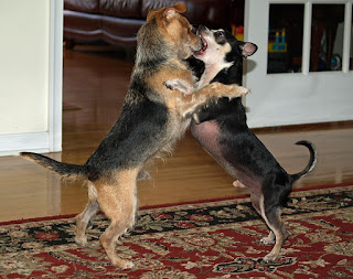 Dog behavior-dog-dog breeds-pet