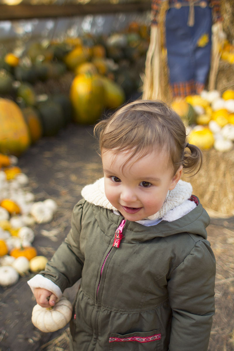 Toddlers and the pumpkin patch