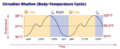 circadian rhythm diagram