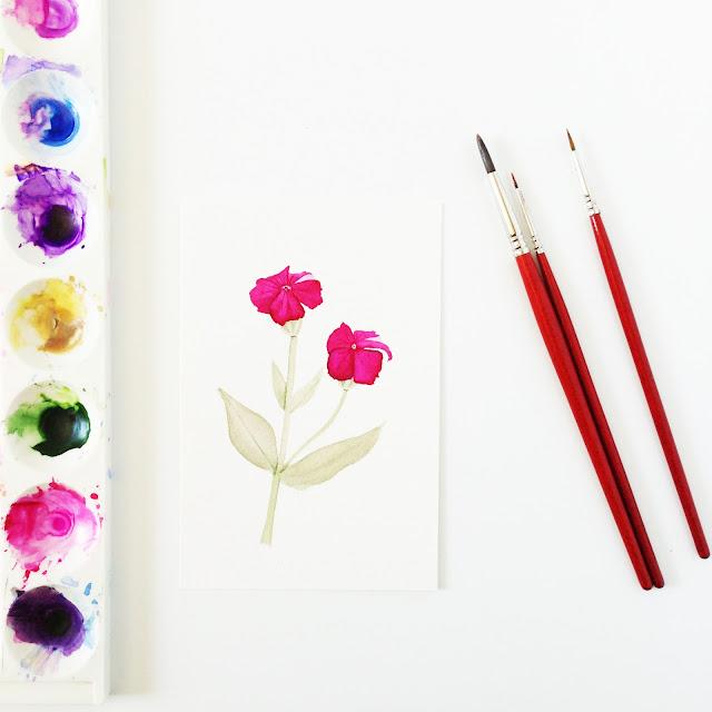 rose campion, botanical watercolor, rose campion painting, rose campion watercolor, Anne Butera, My Giant Strawberry