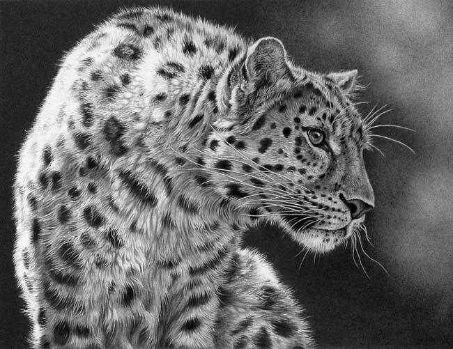 02-Leopard-Alert-Julie-Rhodes-Wildlife-Animals-Realistic-Pencil-Drawings-www-designstack-co