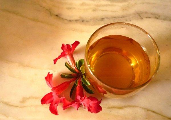 uống nấm linh chi
