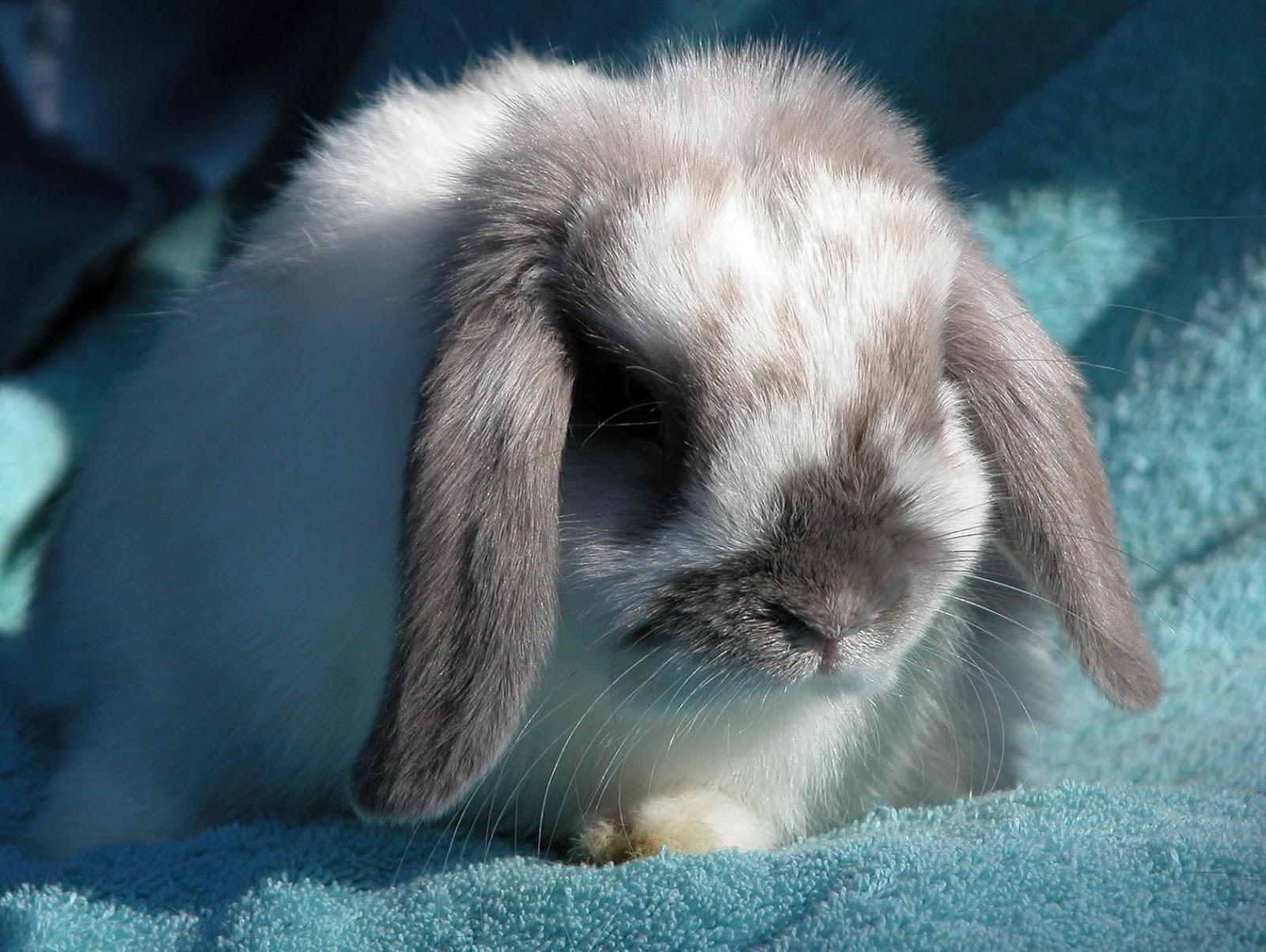 Unique Wallpaper Bunny