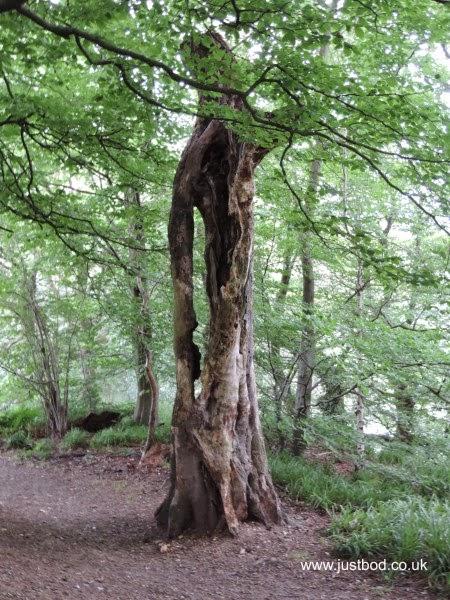 Sculpture Tree