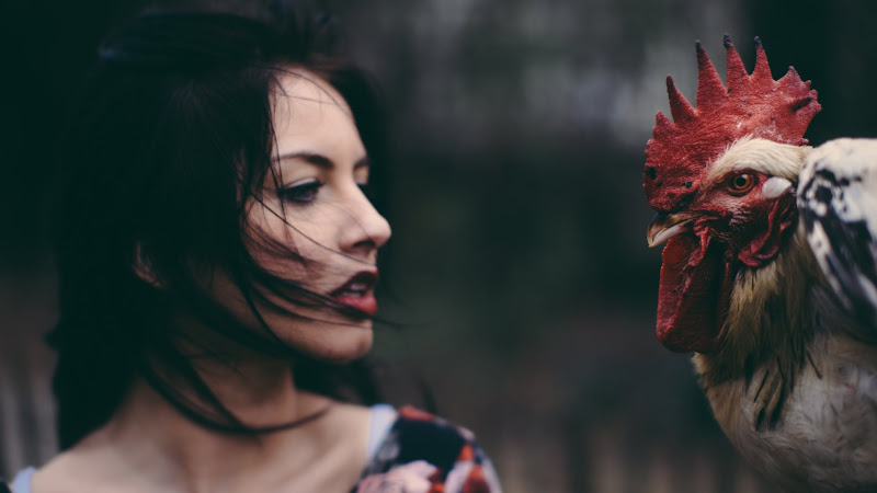 Lady and the Rooster HD