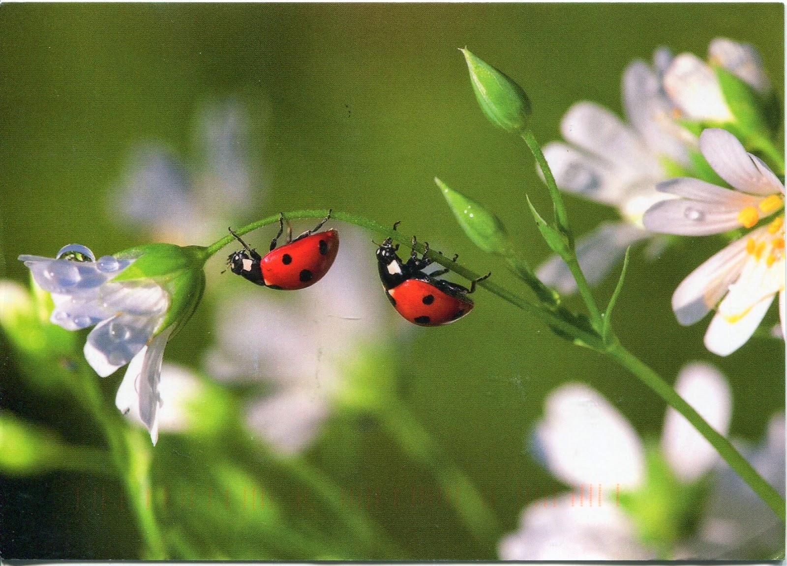 lindaraxa the ladybug project the big release