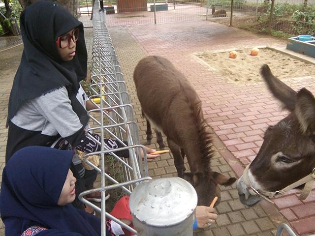 Taman Legenda TMII, pojok edukasi keledai