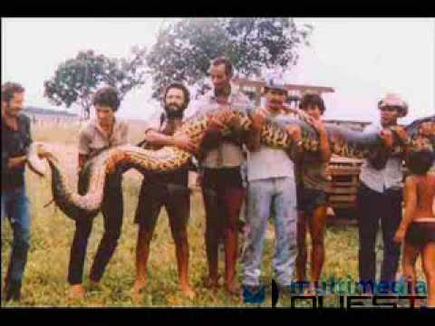 Angelina Jolie 3d Wallpaper World Of Wallpapers World Biggest Snake