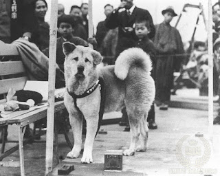 Hachikō waiting at the station