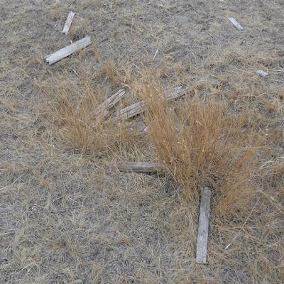 cemetery, Lomond, Alberta, Vulcan County