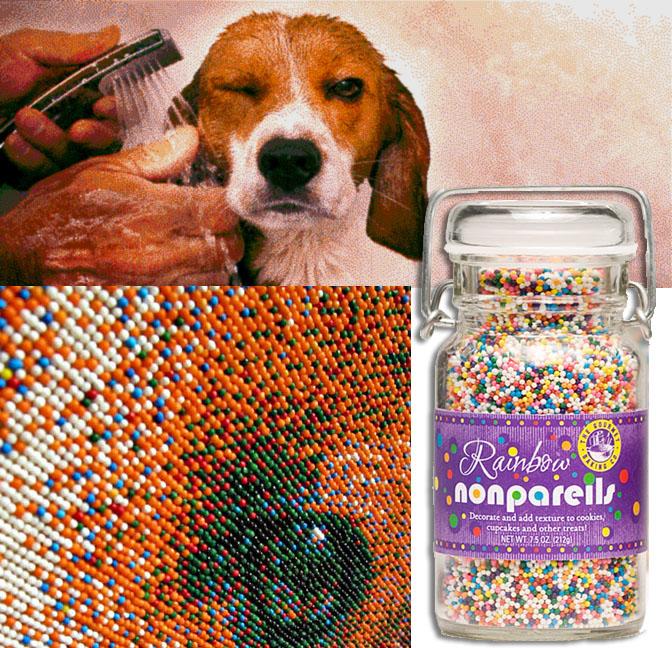 If It's Hip, It's Here (Archives): Nonpareil Pet Portrait