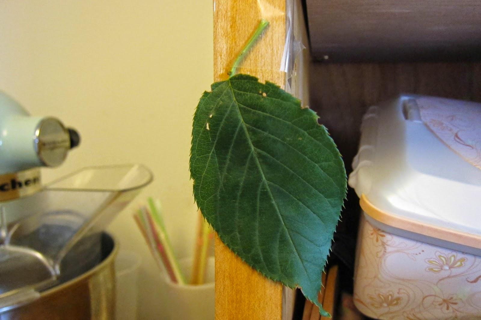 Mfw Ctg K Week 5 L L Leaf Pyramids