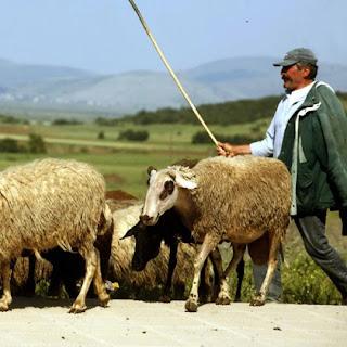Ημερίδα για τους κτηνοτρόφους των Σουλιωτοχωριών στον Αυλότοπο