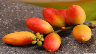 melinjo fruit images wallpaper