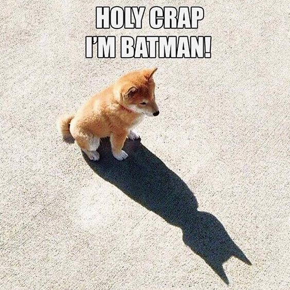 Funny Animal Memes (5)